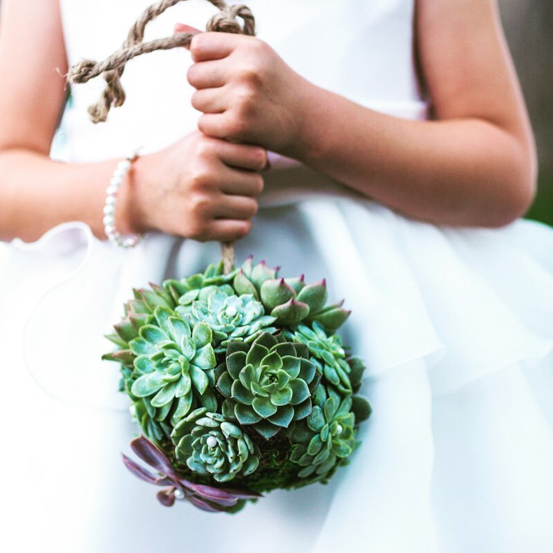 And precious… #flowergirl #stealingtheshow #succulents #kissingball