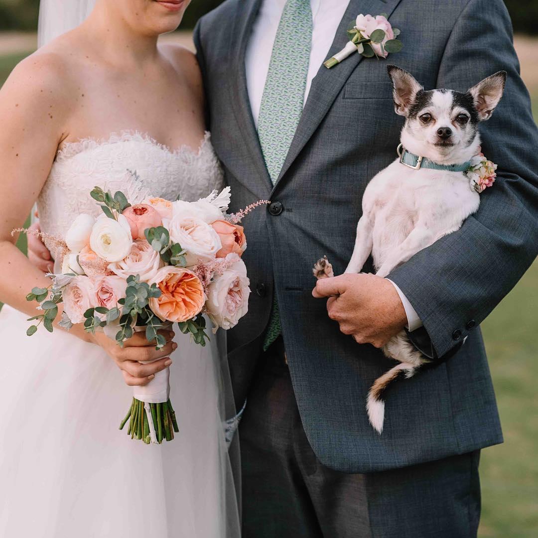 Eggbert stealing the show… @jennidarling  #nofilter #welovedogs #furbaby #mainewedding #bouquet #seacoast #familyaffair #theknot #stylemepretty #weddingflowers