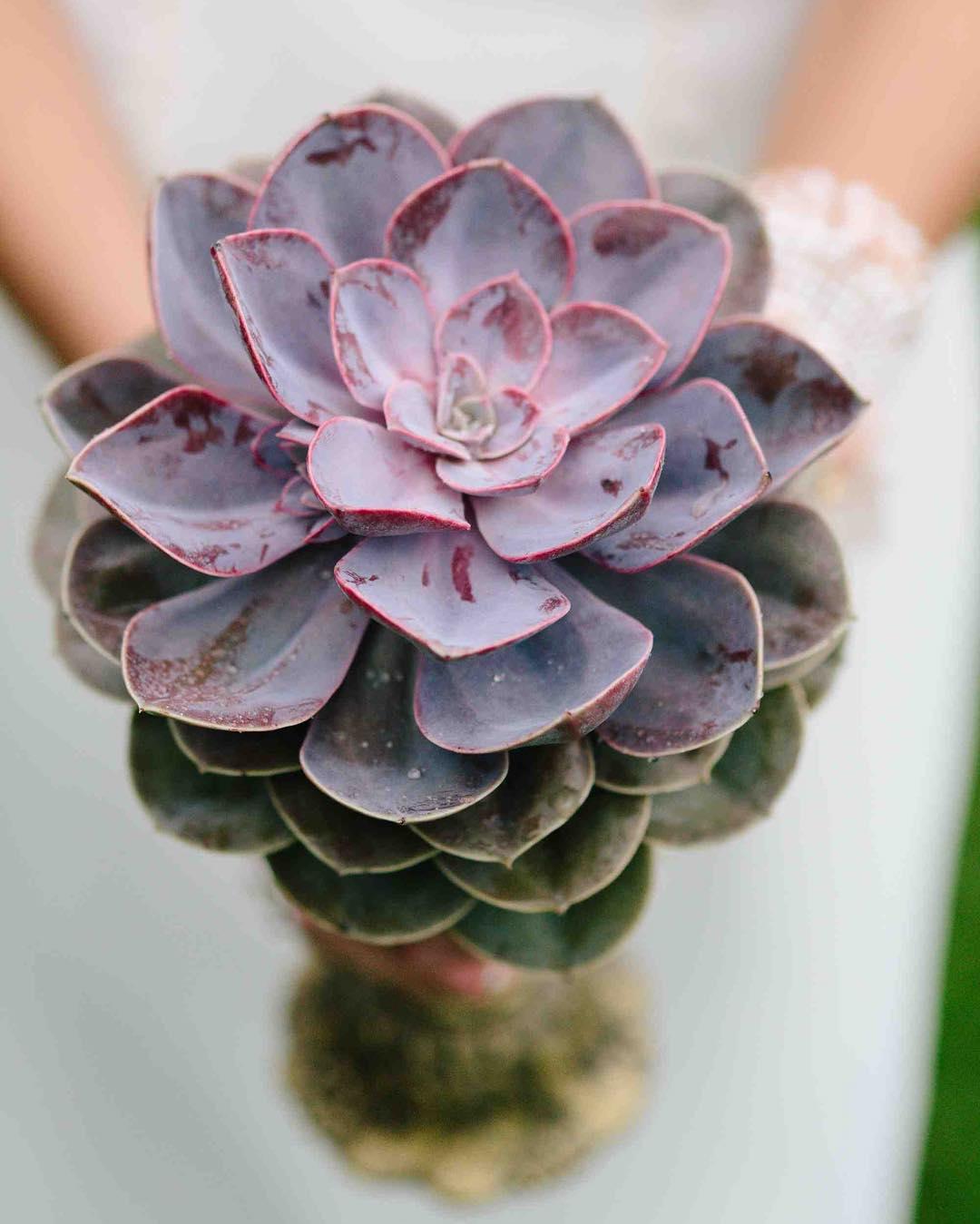 {swoon} photo | @rodeoandcophoto  #succulentbouquet #simple #romantic #vintage #photoshoot #lotusfloraldesigns #weddingflorist