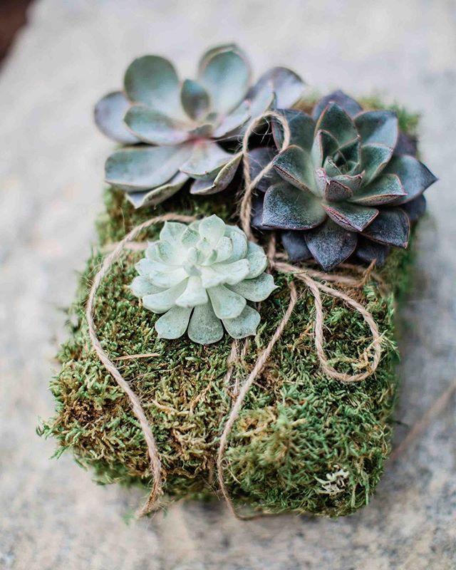 {ring bearer} photo | @erikafollansbee  planning & coordination | @nhwedplanner . . #succulents #moss #rustic #ringbearer #weddingdetails #lotusfloraldesigns #love #thatsdarling #woodland #weddingaccessory #cute #barnonthepemi #nhwedding #barnwedding #theknot #getcreative #shabbychic